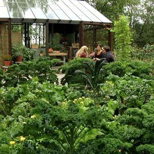 Frodig trädgård på Strömsö