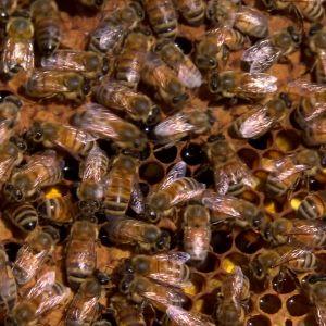 40 bin i en bikupa