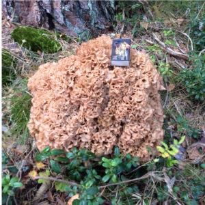 Ann Jonasson  i Bobäck, Kyrkslätt har fotat följande svamp. Är den ätlig och god?