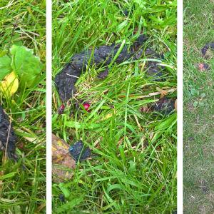 Tre bilder av avföring som Yvonne skickat och undrar vem som lämnat detta efter sig?