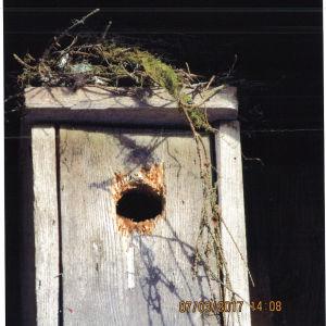 Ett fågelbo på taket till en fågelholk