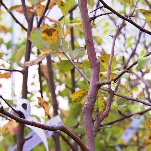 Hösten är en bra att plantera i.