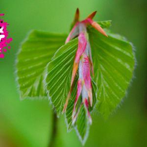 en närbild på en blomma som påminner om blygdläppar