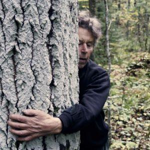 Tarina ihmisistä, joista toiset etsivät metsästä mielenrauhaa ja toiset ovat taloudellisesti riippuvaisia sen hyödyntämisestä.