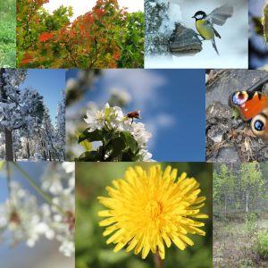 Ett kollage av naturbilder