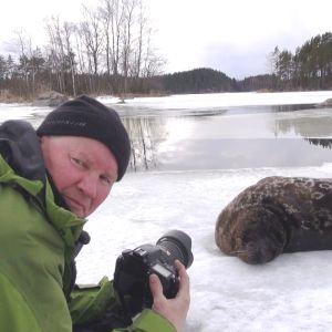 Juha Taskinen kuvaa jäällä saimaannorppaa
