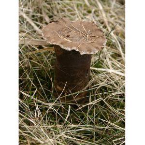 En brun svap med liten hatt bland torkat gräs.