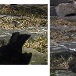 Två bilder på en grå och brun liten fågel
