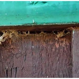 Ett ingångshål för insekter vid ytterväggens panel.