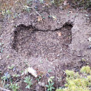 En nästan rektangulär grop i myrstack.