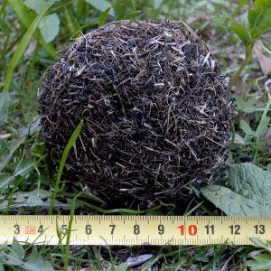 En boll bestående av vattenväxter och alger med måttband framför.