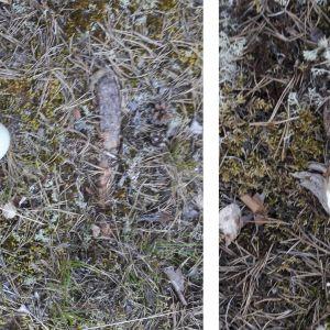 Två bilder på plundrat ägg.