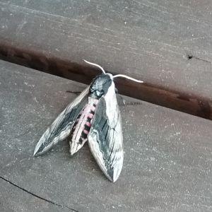 Vad är detta för en fjäril som hela dagen suttit på Britas sommerstugetrappa i Kimito.