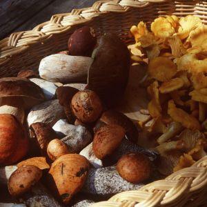 Korg full med svampar