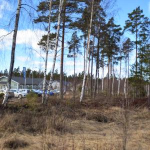 En tom hustomt i skogen
