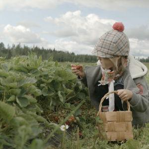 Melanie plockar jordgubbar.