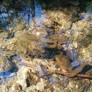 Janni Heikkinens far stötte på konstiga formationer i en strömmande bäck i Karis. Är det månne ett djur som lever inne i den håv liknande formationen och livnär sig på det håven fångar, undrar han.