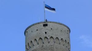 Viron lippu liehuu Pikk Hermannin huipulla