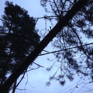 Ett träd har fallit över en elledning