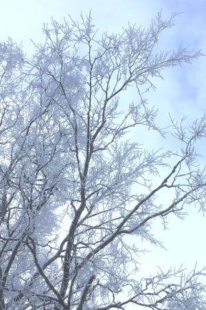 Huurteinen puu