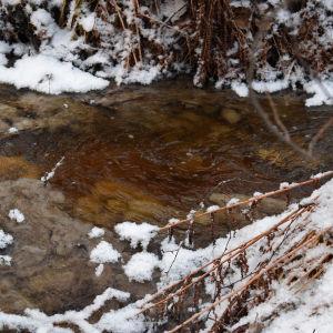 Bajs och urin färger en bäck brun, med vit snö på kanterna.