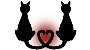 Två katter med svansarna formade som ett hjärta