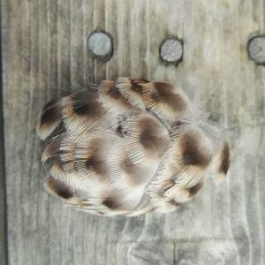 Fjädrar på ett bräde