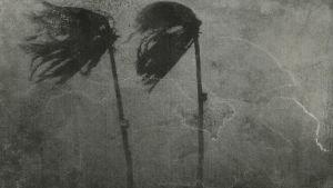 Kari Roover, Yolanda-hirmumyrsky, taideteos