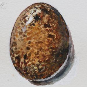 Vesivärimaalaus tuulihaukan munasta
