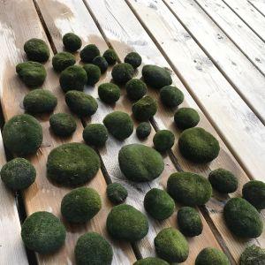 Christina Svennas har fotograferat gröna mossliknande bollar i olika storlekar: 2-15 cm. Bollarna upptäcktes guppande i strandkanten i en vik i Österby i Lovisa skärgård 26.5.2017. De ser likadan ut igenom, vissa har luftrum i. Vad kan det vara?