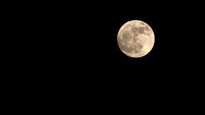 Nästan fullmåne.