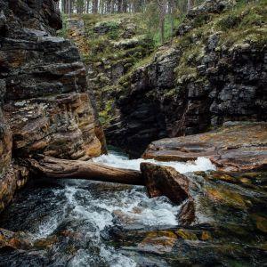 Metsäpuro kalliomuodostelmassa.