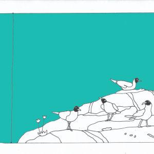 Bild som föreställer måsar på en klippa.