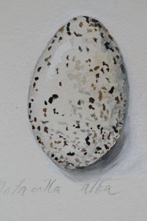 Vesivärimaalaus västäräkin munasta.