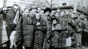 Överlevande fångar i Auschwitz i januari 1945.