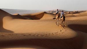 Avara luonto: kesytön arabia, yle tv1