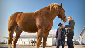 Kiehtova maailma: Todellista hevosvoimaa, yle tv1