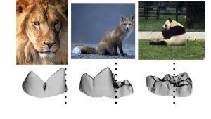 Hampaita eri eläimillä