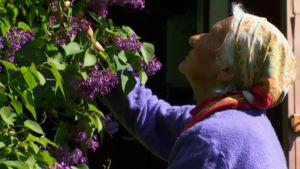 Dora Siivonen doftar på syrener, 2013