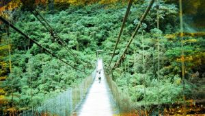 viidakko, riippusilta