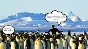 SUojiksen kuplakuva - Pingviinit Nimimerkki: mikä+lie