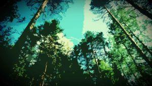 metsä (käsitelty kuva), puiden latvoja, taivasta