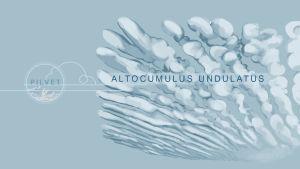 Altocumulus undulatus -pilviä