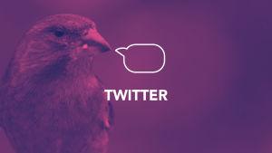 Digitreeniartikkelin pääkuva. Tekstit Twitter, Digitreenit, yle.fi/oppiminen. Taustakuvassa pikkulintu.