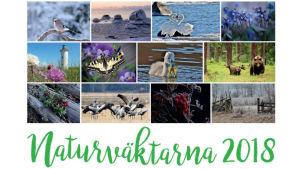 Pärmbilden på Naturväktarnas kalender 2018 med kollage av naturbilder