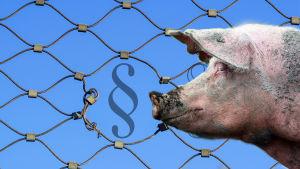 Bildcollage av en gris som skeptiskt snusar på en lagparagraf.
