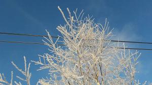 ett vintrigt träd