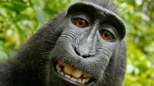 Selfie tagen av makakiapan Naruto.