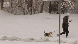 Uutisvideot: Islannissa talven ensimmäinen kova myrsky