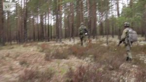 Yle Uutiset Lounais-Suomi: Sotakoira töissä